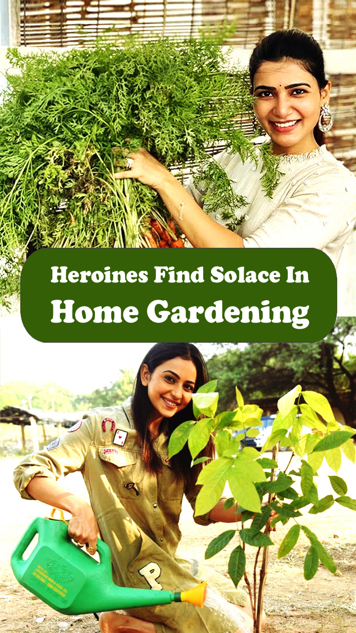 Open Heroines Find Solace In Home Gardening story