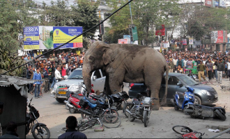 Video: Mad elephant goes violent and uncontrollable in residential area
