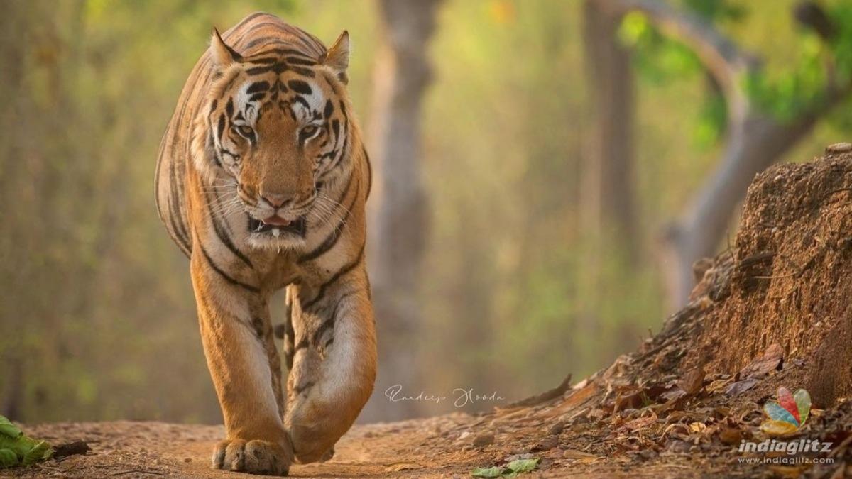 Randeep Hooda raises awareness on an important wildlife issue
