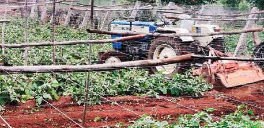 brinjal farm kerala