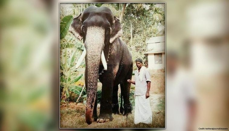 karnan elephant