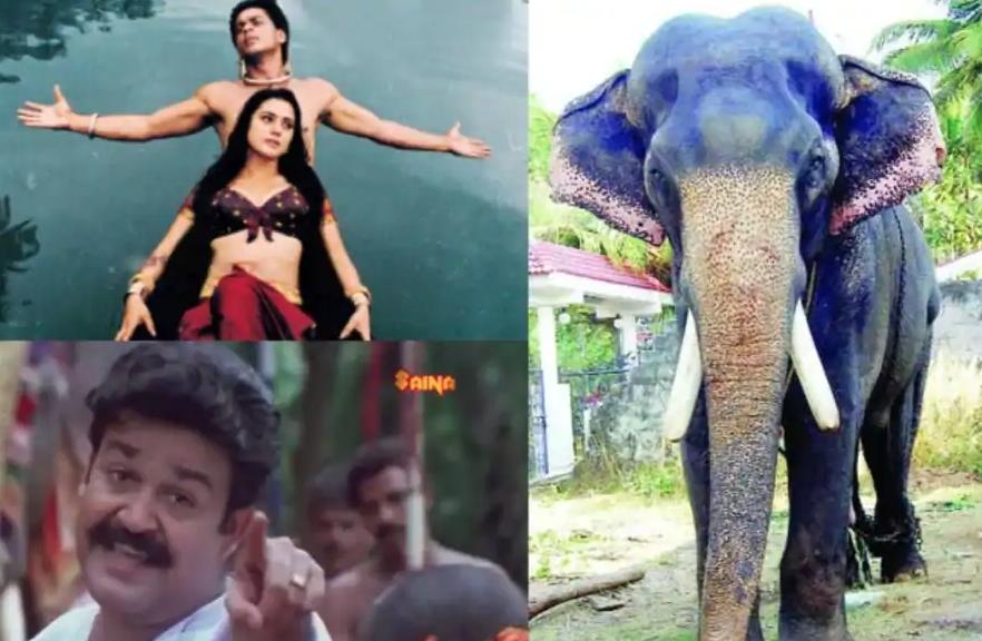elephant karnan died