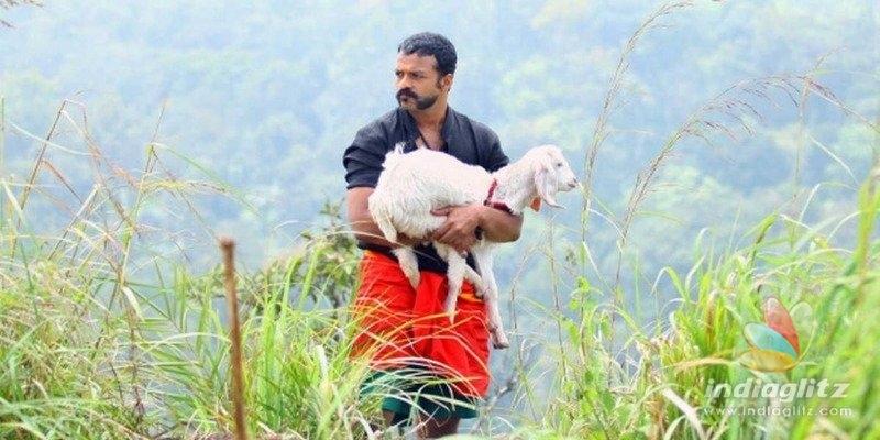Aadu 3 will miss goat pinky; details here!