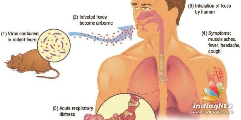 Is Hantavirus more dangerous than Coronavirus? - All you need to know