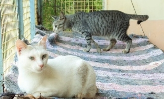 Kerala: 5 cats caught from COVID-19 ward die of STRESS