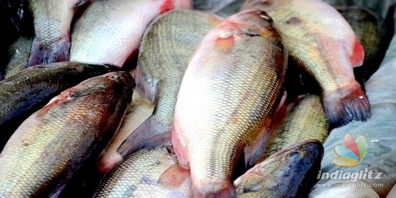Kerala: 35 tonnes of toxic fish seized!