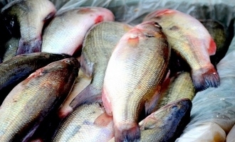 Kerala: 35 tonnes of toxic fish seized!