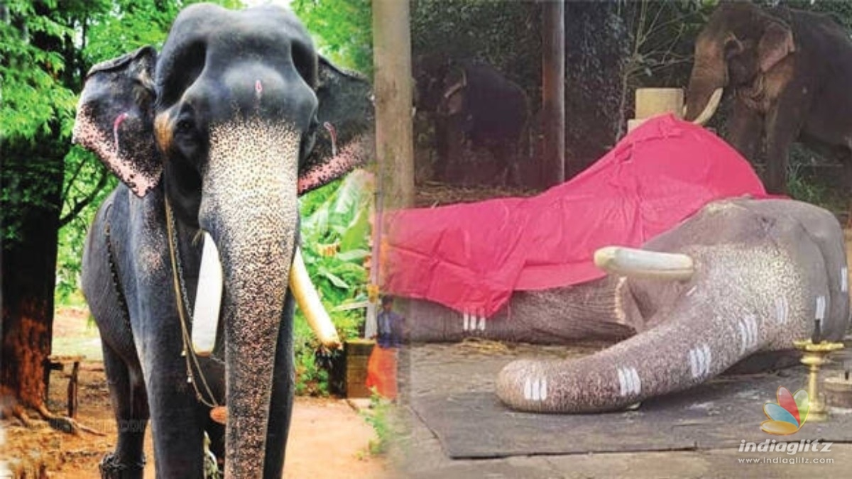 Celebrity elephant Mangalamkunnu Karnan is no more