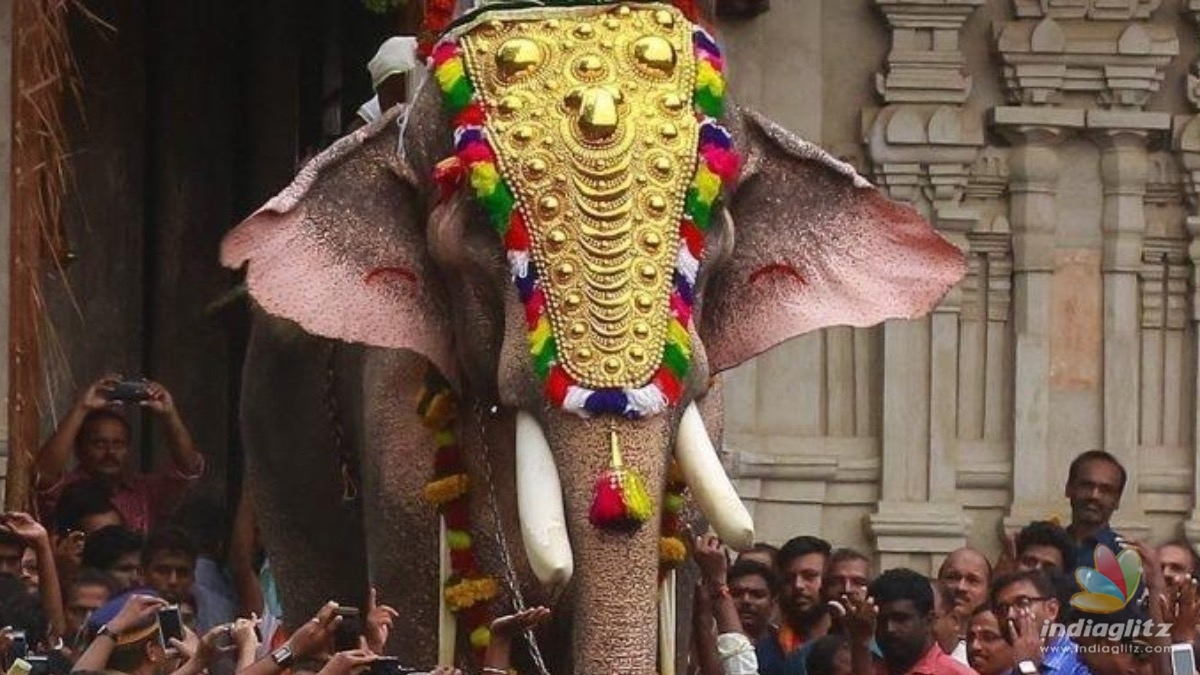 Kerala's dangerous celebrity 'killer' tusker to be paraded in temple fests