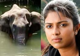 Pregnant elephant killers - Amala Paul suggests apt punishment