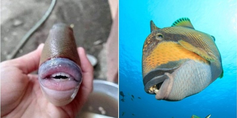 Fish with human lips and teeth shocks people