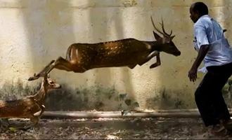 2 Deer Enter Residential Areas in Chennai