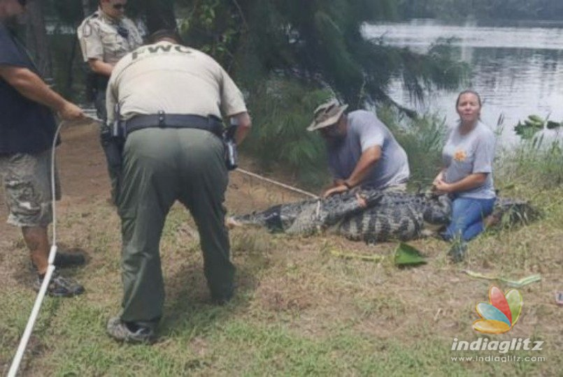 Body of woman bitten by alligator found