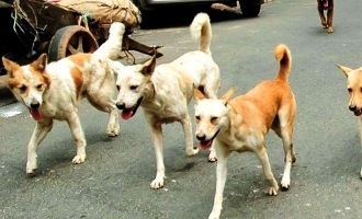 Heartbreaking! Almost Hundred Dogs Poisoned in Telangana