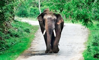 Elephant Owner and Mahout Jailed for Illtreating Animal Resulting in Death