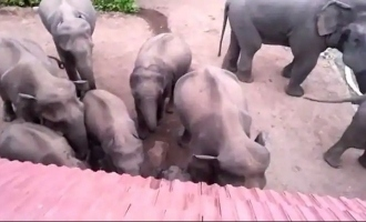 Sathyaraj's sister's house invaded by 15 wild elephants?  scary images