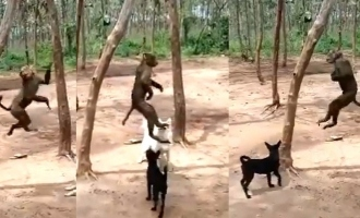 Shocking Video: Monkey tortured and hanged to death by three men