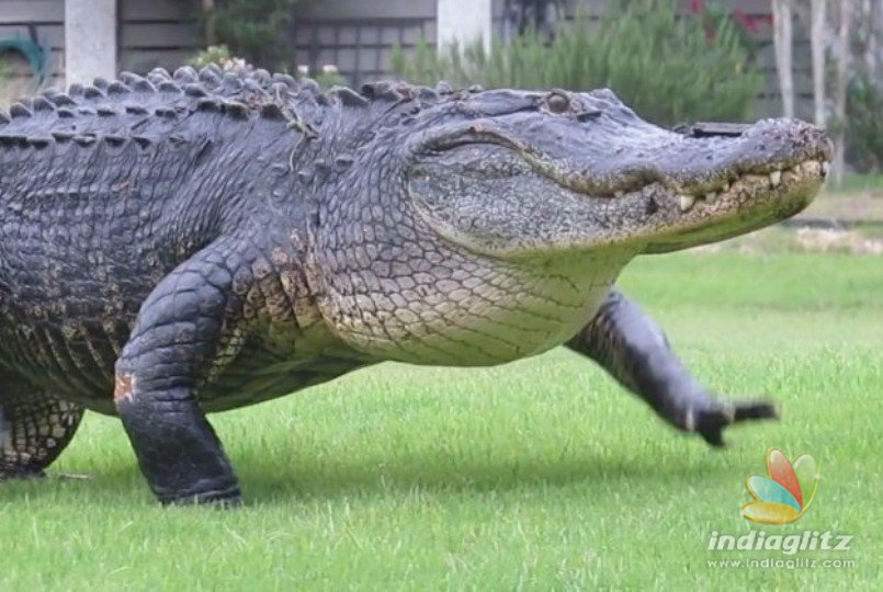 Alligator kills woman who was walking her dogs by the pond