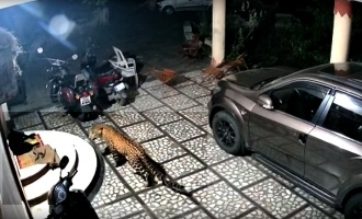 Scary and shocking: Leopard pounces on sleeping dog outside house, CCTV footage viral