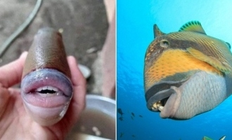 PICTURES -  Fish with human lips and teeth shocks people