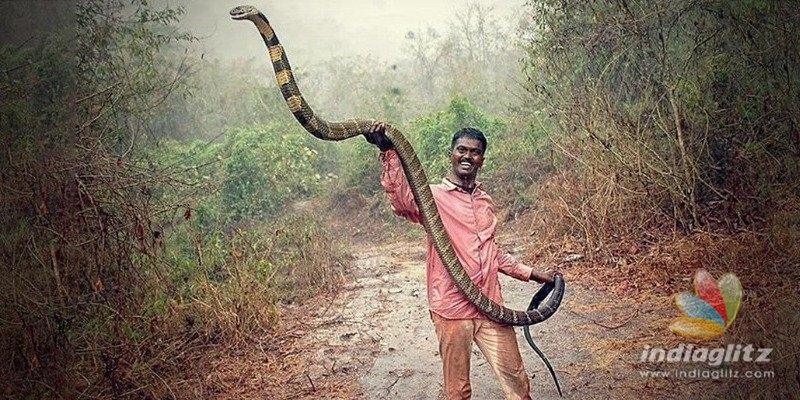 King Cobra Caught in Kollam, Video Inside