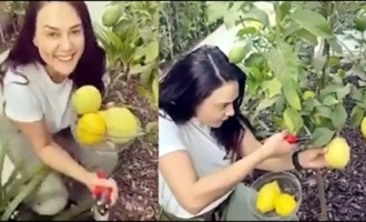 Actress Preeti Zinta's Kitchen Garden View || Real Preeti Zinta Doing Kitchen Garden || IG Telugu
