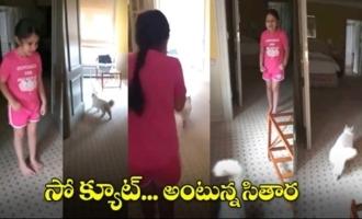 Sitara Ghattamaneni Playing With Her Cat | Sitara Latest Cute Video | Mahesh Babu | IG Telugu
