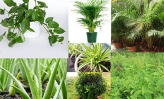 These plants will help you to generate oxygen at home in covid 19 pandemic situation