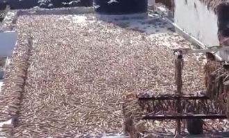 Locusts invade Rajasthan, destroy crops like crazy!