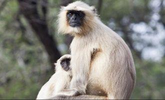 Family demands police case against monkeys!