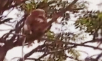 UP: Monkeys snatch COVID test samples from lab guy, spark fears of spread