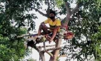 తెలంగాణ విద్యార్థికి కరోనా కష్టం.. చెట్టుపైనే ఐసొలేషన్..